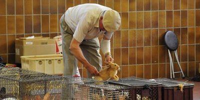 50 Jahre Kleintierzuchtverein R 369